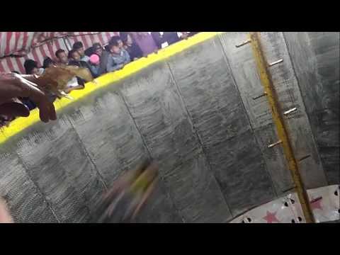 WALL OF DEATH (Gila..!!! Antraksi Tong Setan 4 Cewek dan 1 Cowok)