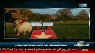 نشرة المصرى اليوم  أسماك القرش تتنبأ بفوز ترامب والماعز تنتصر لهيلاري