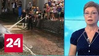 Смотреть видео Япония возрождает китобойный промысел - Россия 24 онлайн
