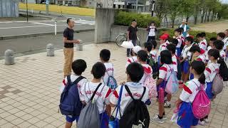 春江東小の児童とアーモンドの収穫 20180829