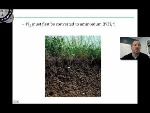 Nitrogen and Plants