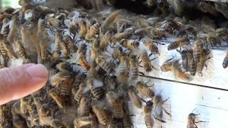 Can you find the queen in the swarm?