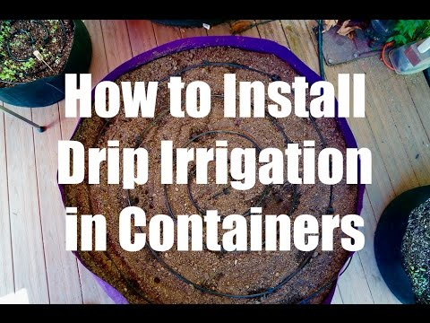 how-to-install-a-drip-irrigation-system-in-containers-//-growing-your-fall-garden-#5