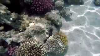 Download Schnorcheln Mahmya  (Giftun-Island) Rotes Meer -Teil 1 gopro hero 4 Mp3 and Videos