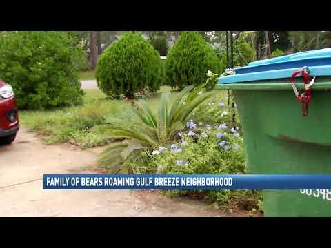 Bears spotted in Gulf Breeze - NBC 15 News, WPMI