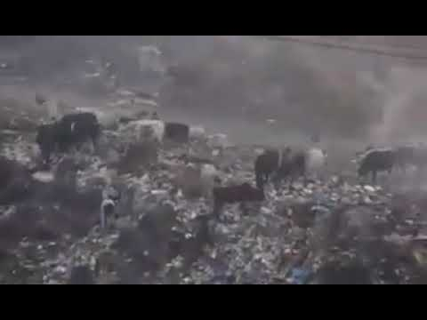 Mirpur AK city waste dumped for animals