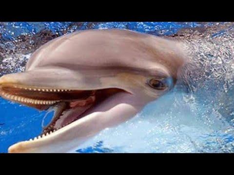 Песня про маленького дельфиненка