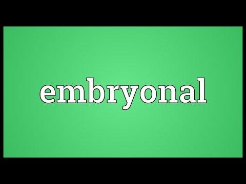 Header of embryonal