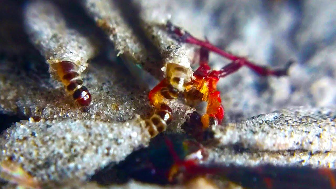 Plaster Bagworm Feeding Frenzy! | aka Household Casebearer | Phereoeca  Uterella | Macro 4K
