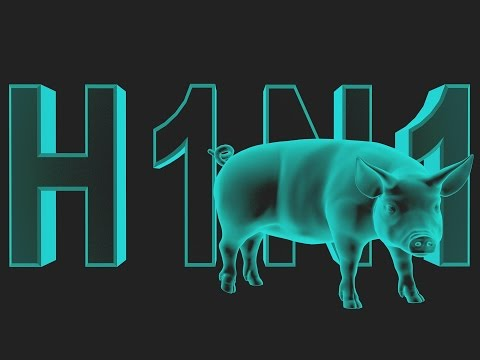Swine Flu: What You Need to Know (Biology/Diseases)