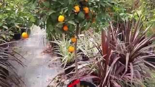 24.Израиль.Все для сада    и балкона:цветы,рассада,деревья