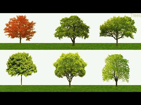 Tree Names, Meaning & Pictures | Trees vocabulary