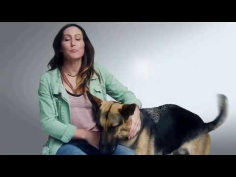 "Subaru 'Share the Love' Campaign: ""ASPCA - Gunner"""
