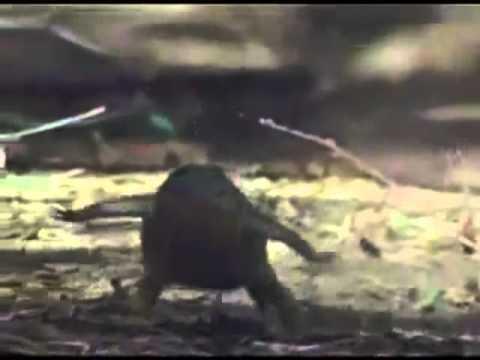 Interior Crocodile Alligator Dubstep - YouTube