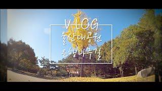 VLOG l 브이로그 나 오늘 가을 가을해~ 울산대공원 동문 은행나무길