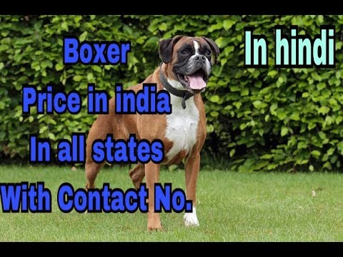 Boxer Price in india in her states with contact no . in hindi