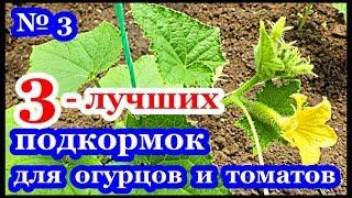 видео Как делать подкормку томатов