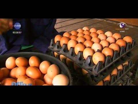 เกษตรทำเงิน : ไก่ไข่ออร์แกนิก เลี้ยงหลังบ้านต้นทุนต่ำ