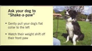 Train Your Dog: Shake, Wave, Roll Over And Speak
