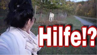 Babywippe und Heizstrahler sind angekommen I Imitat zu Miffy I Angst vorm Lama