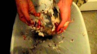 EASY: How to clean a dove - No tools needed