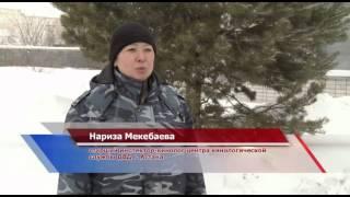 Астана. Собаки