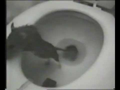 Rat Coming Out of the Toilet! YUCK! - YouTube