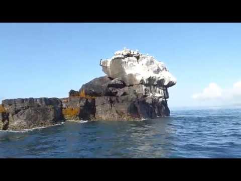 piqueros-patas-azules-en-roca-unión,-isla-isabela