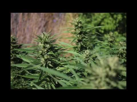 Planters Of The Trees-Mendo Dope ft. Winstrong