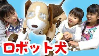 UUUM忘年会のビンゴで当たった可愛いロボット犬♥ タカラトミー のオムニ...