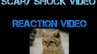 ADDTV: Shock Video Reaction Video FT. Isiah and Hayley