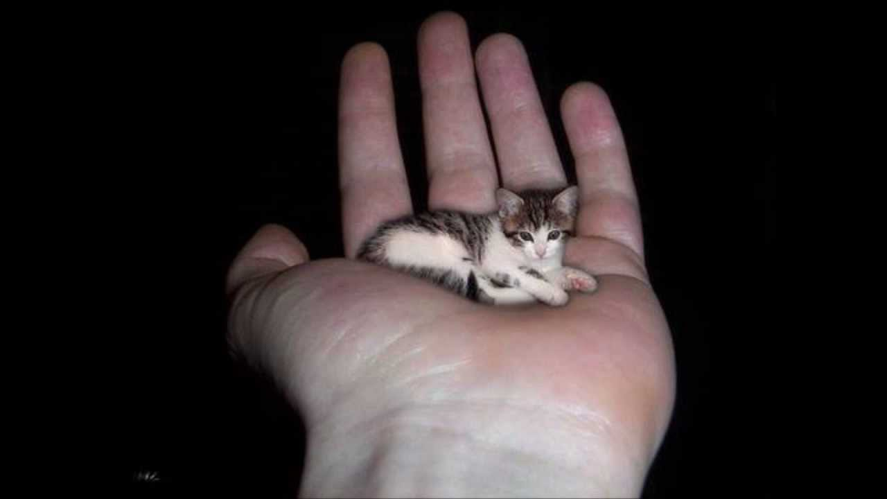 worlds smallest cat 2011 new world record youtube