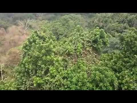 Smithsonian Tropical Research Institute Canopy Crane & Smithsonian Tropical Research Institute Canopy Crane - YouTube