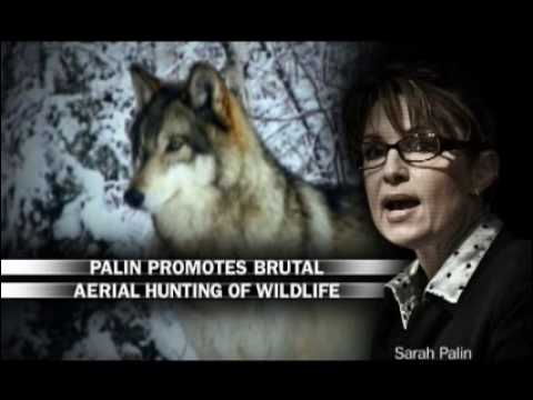 Brutal: Sarah Palin's Record On Aerial Wolf Hunting