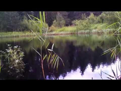 Estonian Nature. Põlvamaa. Quietness