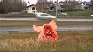 Свиные ноги и головы были разбросаны на месте строительства мечети в Исландии