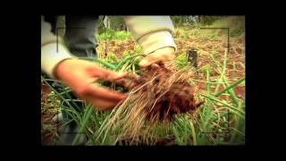 HASTA LA SEMANA QUE VIENE (trailer) - Misiones, Argentina