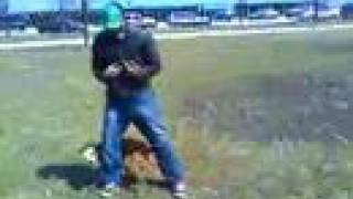 Pitbull Training Orlando Florida Obedience With Attention Dog Training