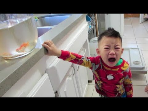 Poor Kid Finds Out His Fish Died - Daily Vlog 1172 - December 9th, 2018