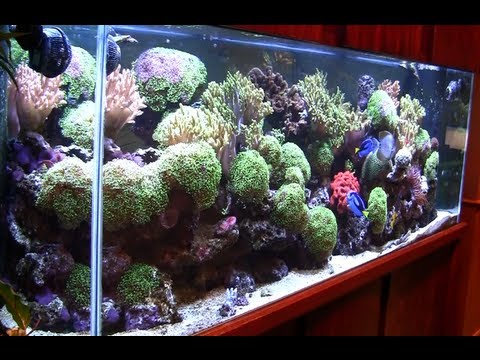 The Wonder of the Aquarium Store - Just video of Salt Water Fish and Corals