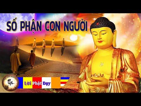 Câu Chuyện Phật Giáo Hay Nhất Về Nhân Quả và Số Kiếp Con Người - Kể truyện đêm khuya