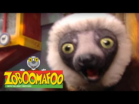 Zoboomafoo 216 - Don't Fence Me In (Full Episode)