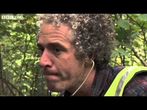 Gordon Buchanan Attempts to Take the Heartrate of a Wild Bear  The Bear Family and Me  BBC Two