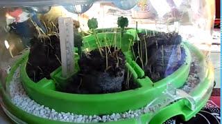 ЭКОСИСТЕМА Clementoni/Обзор/ садим семена травы, клевера, укропа