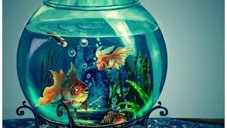 Уход за Аквариумными рыбками питание ,советы(часть 1)