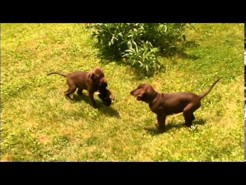 PUPPYHOOD Part YouTube - 26 dogs puppyhood photos