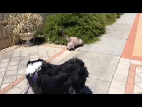 Dog walking Perth
