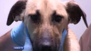 В Евпатории чума собак – что слухи, а что правда?