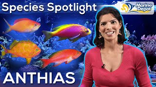 Species Spotlight: ANTHIAS | With Hilary, Marine Biologist of WaterLogged