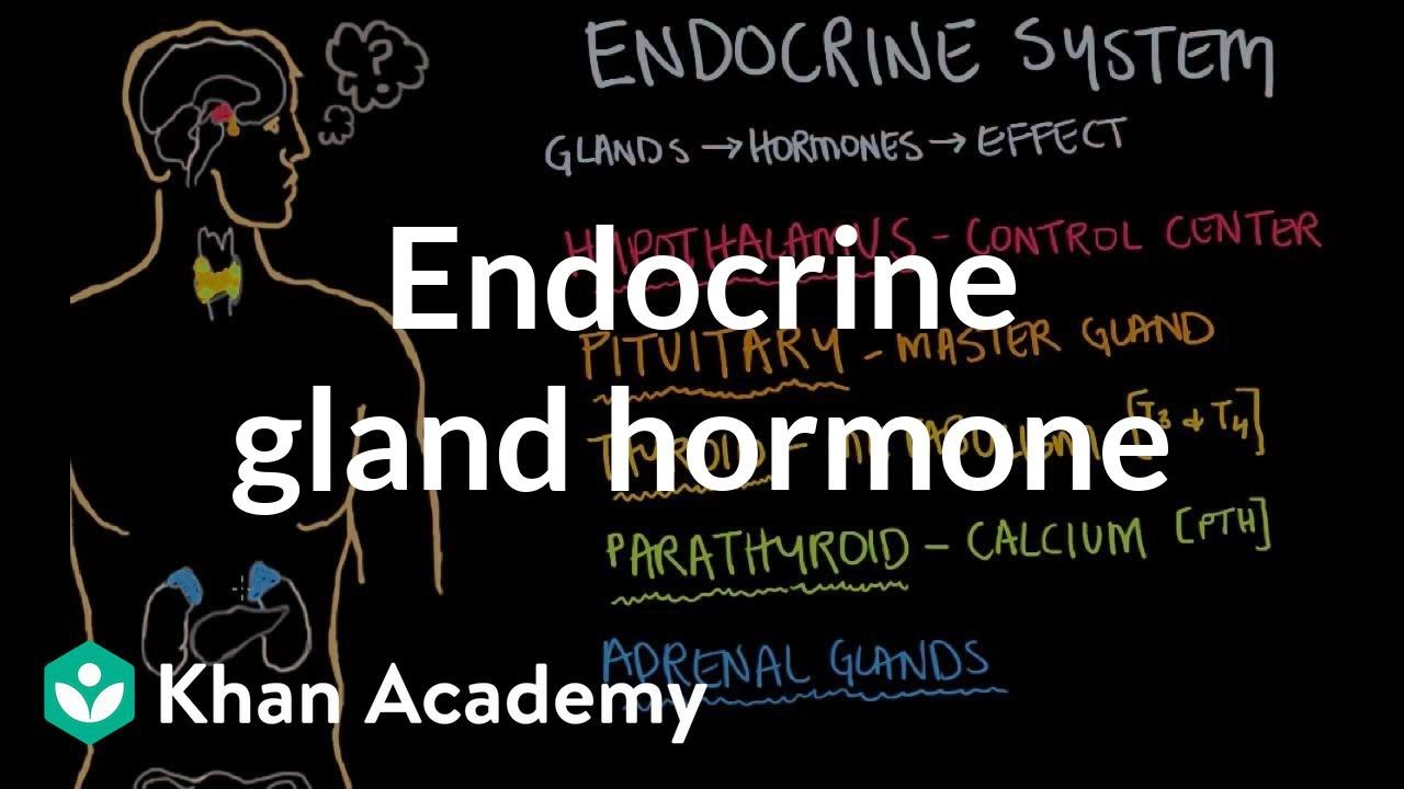 Endocrine gland hormone review | Endocrine system physiology | NCLEX ...